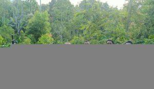 FOTO: Tim Satnarkoba Polres Kerinci Berada di Lokasi Tanaman Ganja di Perladang Desa Koto Baru Jujun, Kerinci.foto ist