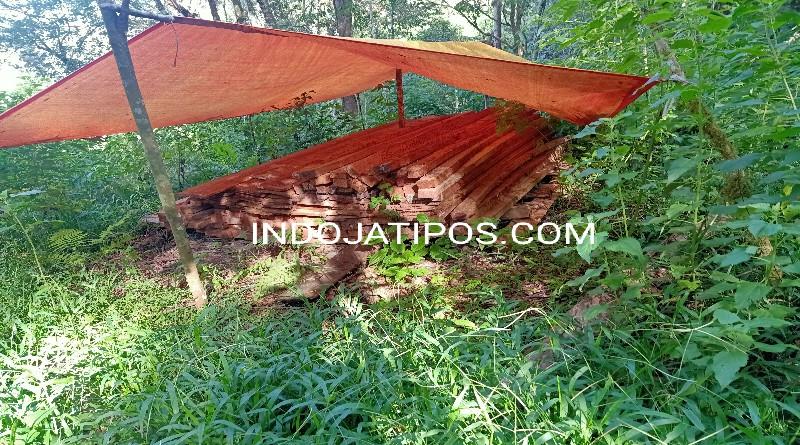 Diduga Ada Aktivitas Illegal Logging di TNKS, Tumpukan Kayu Siap Jual Ditemukan